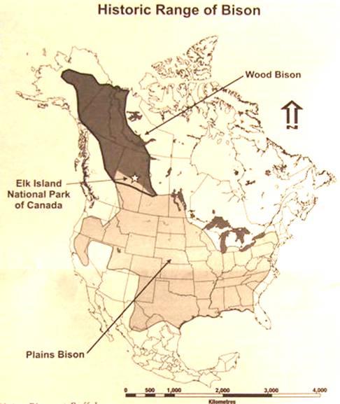 canada elk island national park. Black Bedroom Furniture Sets. Home Design Ideas